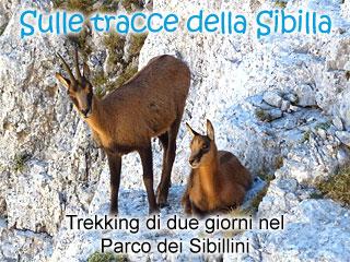 Sulle tracce della Sibilla