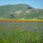 fioritura Castelluccio 2008