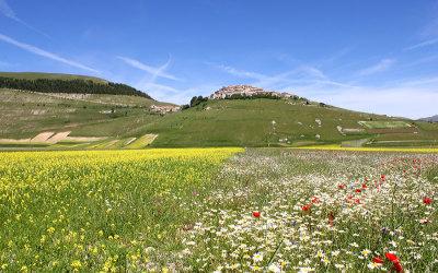Fioritura Castelluccio 2012