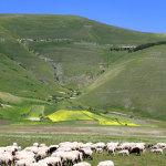castelluccio 2012