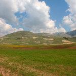 fioritura Castelluccio 2011