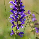 fioritura spontanea 2012