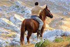 Sibillini cavallo Castelluccio