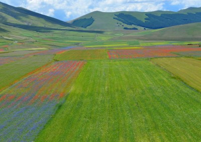 Flowering Castelluccio 2016