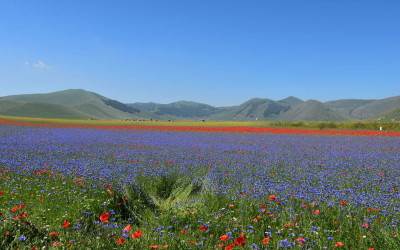 Espetáculo da natureza: os tapetes floridos de Castelluccio di Norcia