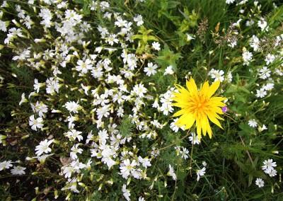 fioritura spontanea 2016