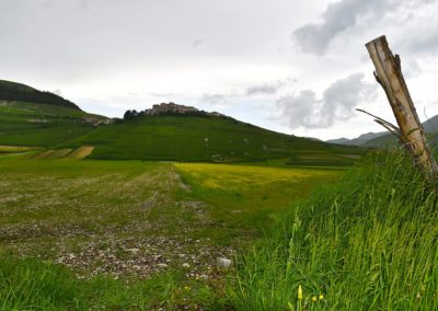 Fioritura Castelluccio di Norcia 2018