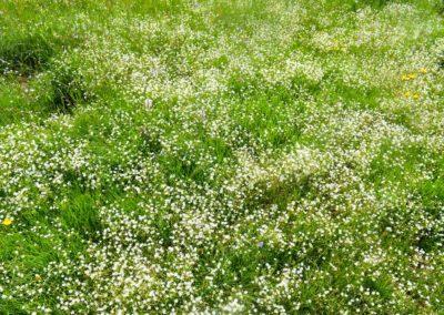 fioritura spontanea 7 giugno 2018