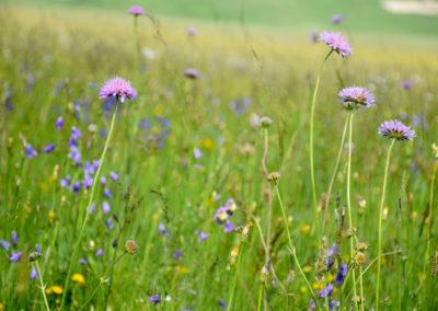 fioritura-spontanea-2018-06-14-08