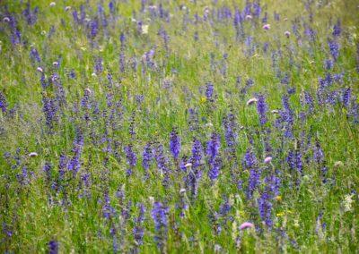 fioritura-spontanea-2018-06-14-11