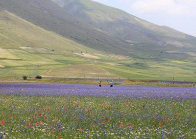 fioritura-calpestata-turisti-e-24