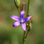 fioritura spontanea 2011