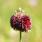 fioritura spontanea 2013