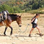 Trekking mulo Sibillini