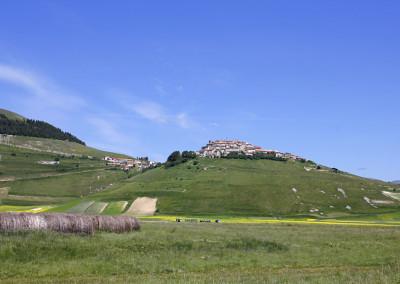 fioritura 2014 Castelluccio