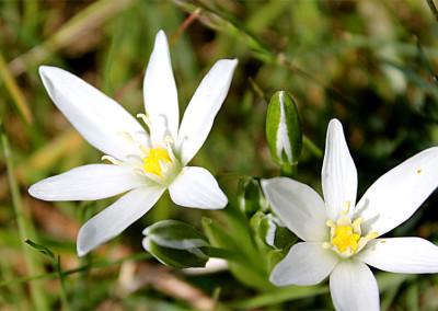 fioritura altopiano 2014