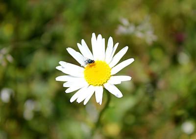 fioritura 2014 altopiano