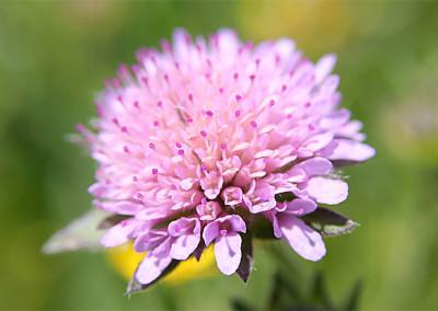 2014 fioritura spontanea
