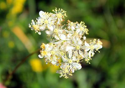 fioritura spontanea 2014