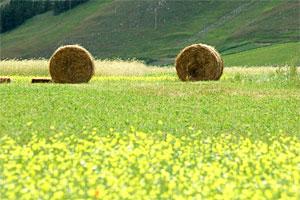 Agriturismo Castelluccio di Norcia