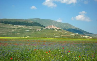 Flowering Castelluccio 2008