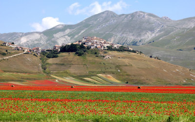 Flowering Castelluccio 2010