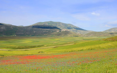 Flowering Castelluccio 2011