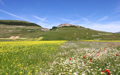 Flowering Castelluccio 2012