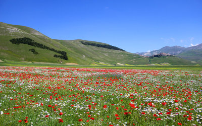 Flowering Castelluccio 2013