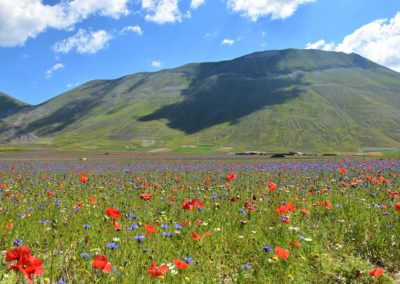Flowering of Castelluccio 2018