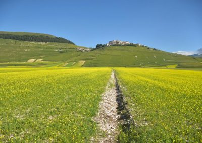 2018 Flowering of Castelluccio