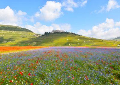fioritura 2018 Castelluccio