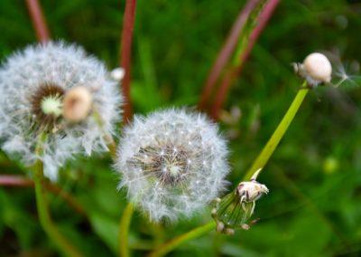 fioritura-castelluccio-2018-05-31-04