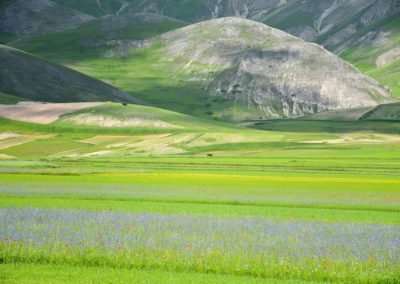 fioritura-castelluccio-2018-06-07-04