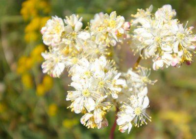 castelluccio fioritura 27 giugno 2019