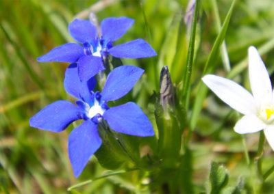 fioritura spontanea 13 giugno 2019