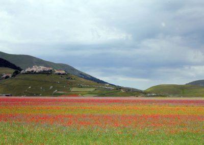 fioritura-castelluccio-02-luglio-2020-06