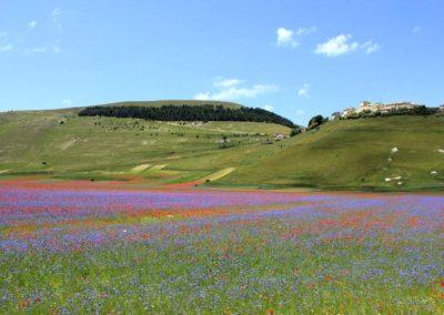 fioritura-castelluccio-02-luglio-2020-11