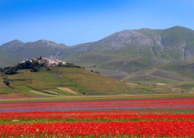 fioritura-castelluccio-09-luglio-2020-05