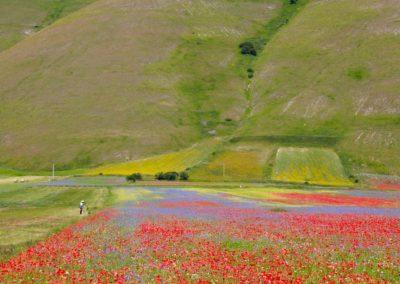 fioritura-castelluccio-09-luglio-2020-08