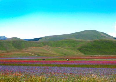 fioritura-castelluccio-09-luglio-2020-09