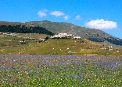fioritura-castelluccio-09-luglio-2020-10