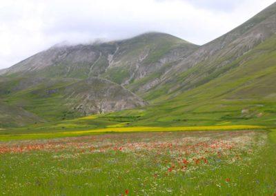fioritura-castelluccio-11-06-2020-03