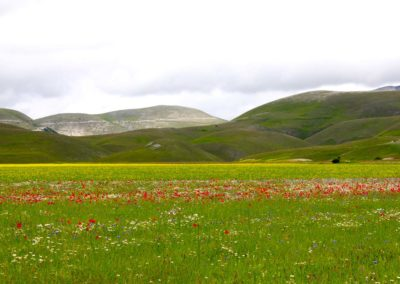 fioritura-castelluccio-11-06-2020-05
