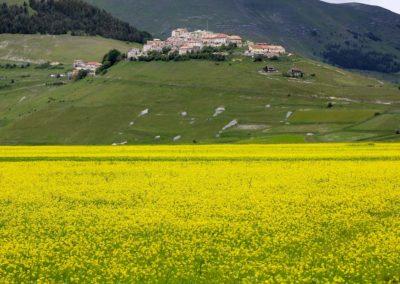 fioritura-castelluccio-11-06-2020-06