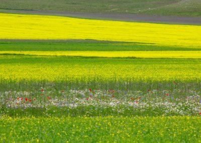 fioritura-castelluccio-11-06-2020-07