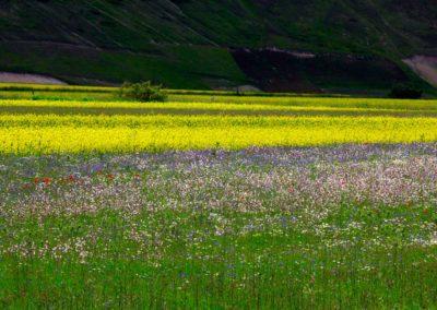 fioritura-castelluccio-11-06-2020-09