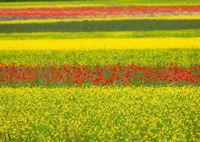 fioritura-castelluccio-18-06-20-03