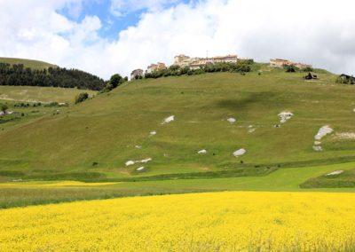 fioritura-castelluccio-18-06-20-10
