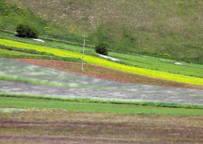 fioritura-castelluccio-2020-01